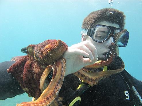 Přisátá chobotnice může zachránit život (ilustrační foto)