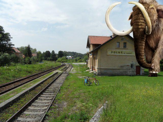 I okolo nádraží Polná se aktuálně potulují mamuti. Podle našich informací by se rádi dostali do Dobronína.