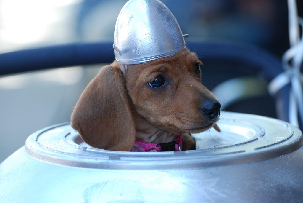 UFO-3-Dog-Pilot