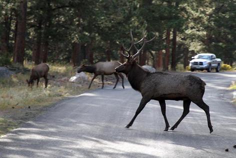 Tisíce jelenů nadměrně poškozují slovenské silnice!