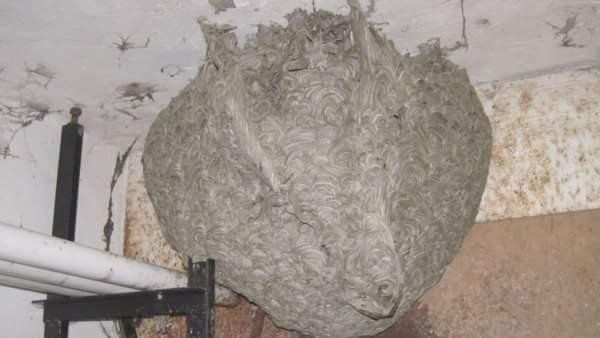 Hnízdo Satana na sněmovních toaletách.