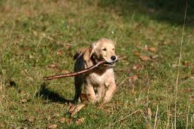 Gerhart, psík pana Bohumíra byl do doby spatření Buddhy šťastným zvířetem. Nyní trpí úzkostnými stavy.