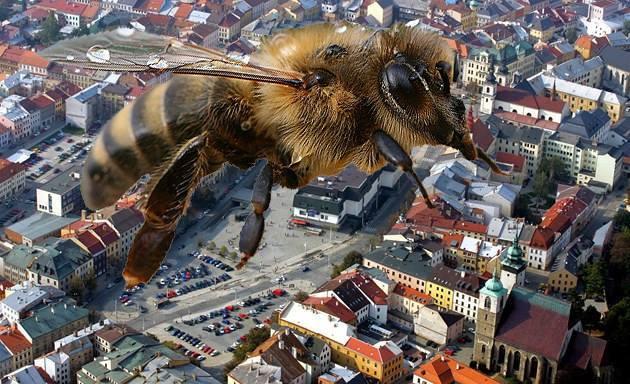 """""""Tady teď bydlím já,"""" jakoby se včela vysmívala celé Jihlavě."""