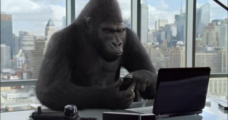 ebola_gorila